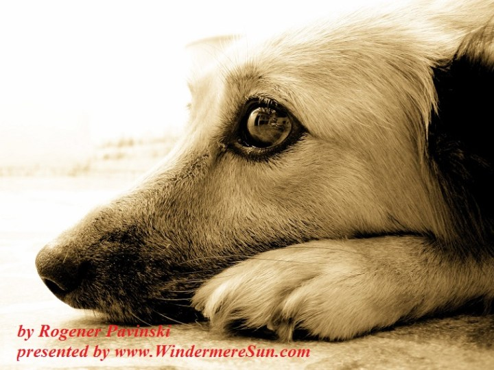 Pensive look of a dog-zaninha-1392366, freeimages, by Rogener Pavinski final