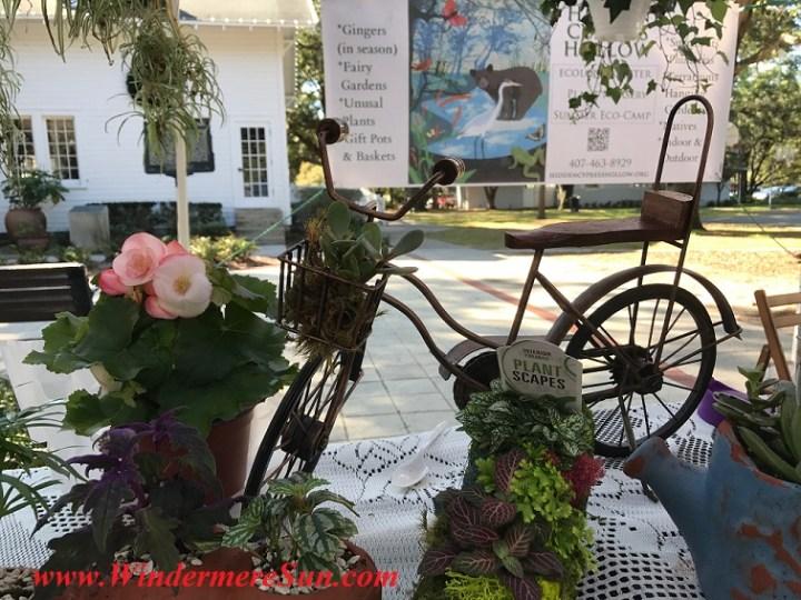 begonia and bike planter final