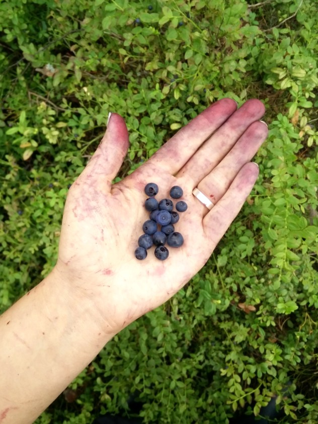 blueberries in the forest, Wind from the North