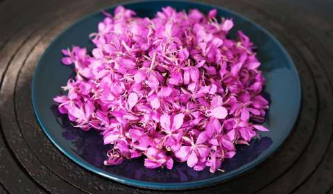 Fireweed recipe