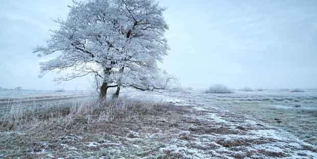 Winter mit Windhunden