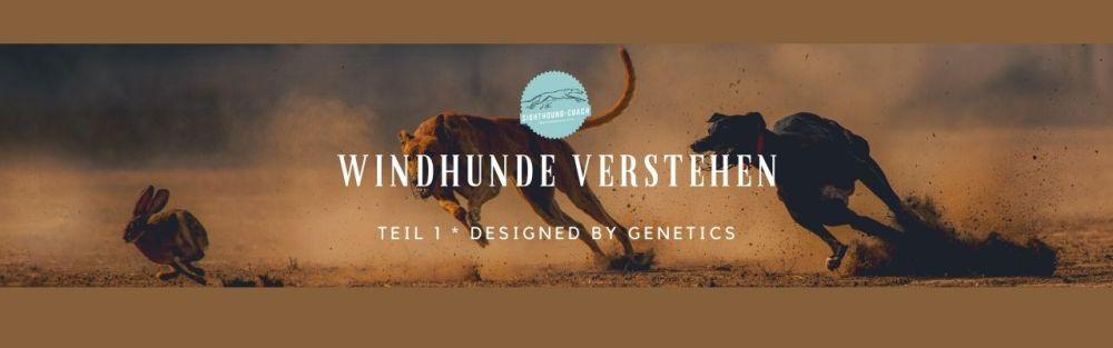 Windhunde verstehen Teil 1