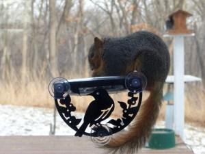 Squirrel Window Feeder