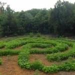 String Bean Labyrinth