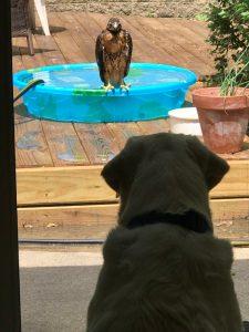 Dog and hawk