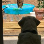 Dog and hawk