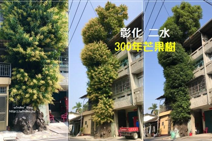 彰化二水∥ 透天厝夾縫中的300年芒果樹超壯觀,高達6樓依然會開花結果! 源泉村員集路/源泉火車站附近