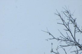 ATTEMPT AT ARTSY SHOT OF TREE BRANCHES (with SNOW!)