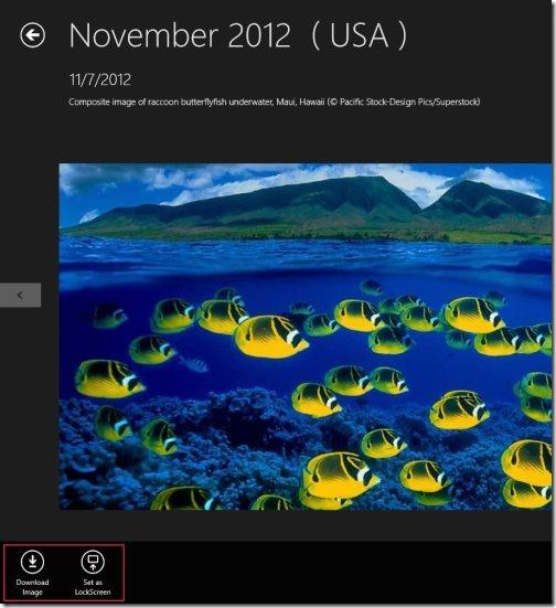 Bing's Wallpaper