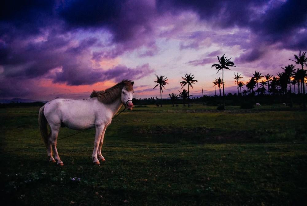 MauiHidalgo_Bagasbas-horse