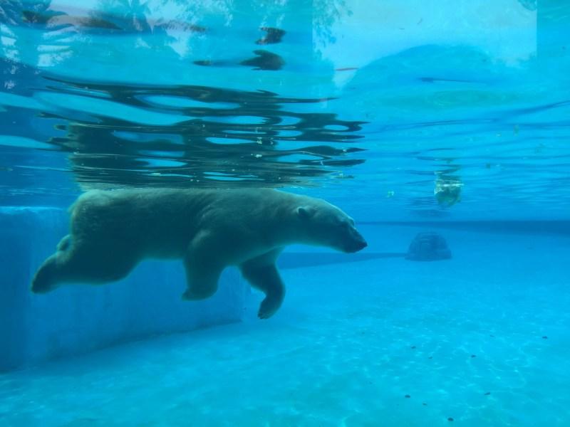 wildlife reserves singapore zoo