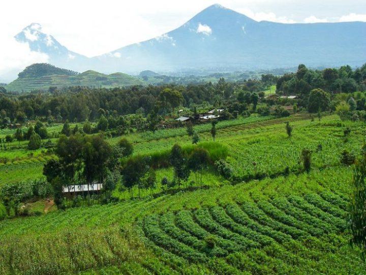 tanah vulkanik, salah satu media yang baik bagi tanaman pot