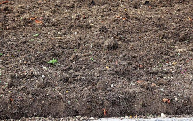 tanah gambut bisa digunakan sebagai media tanam untuk tanaman pot