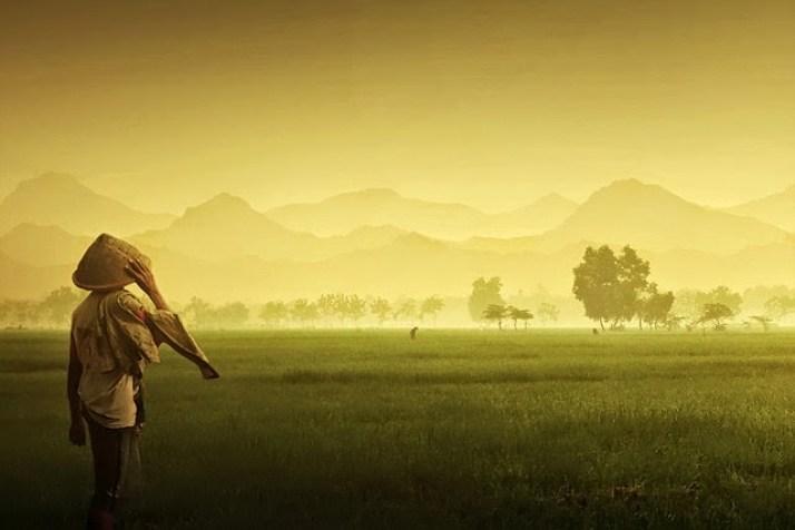 seorang yang berprofesi sebagai Petani sedang memandangi hamparan sawah luasnya.
