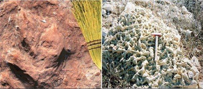 Contoh dari Batuan Sedimen Organik