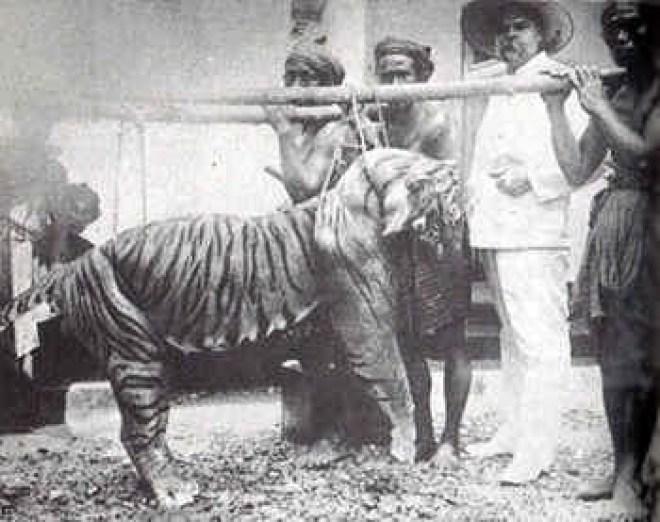 Perburuan Harimau Bali
