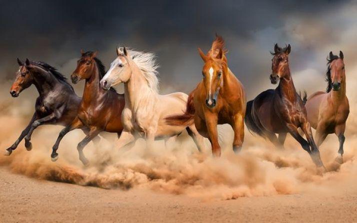 kuda gerombolan