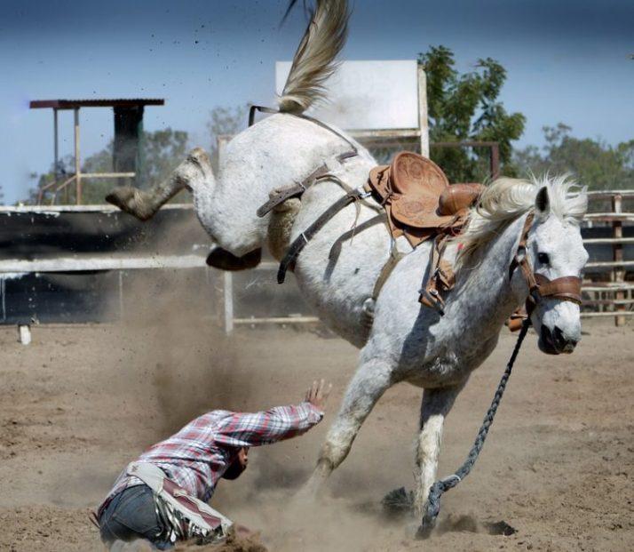 joki kuda