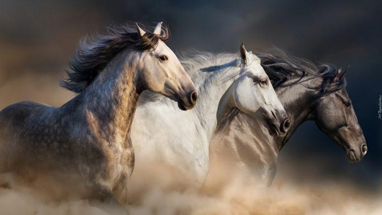 kuda penari