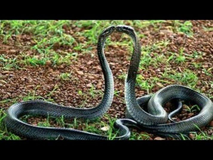 ular Nyi Blorong