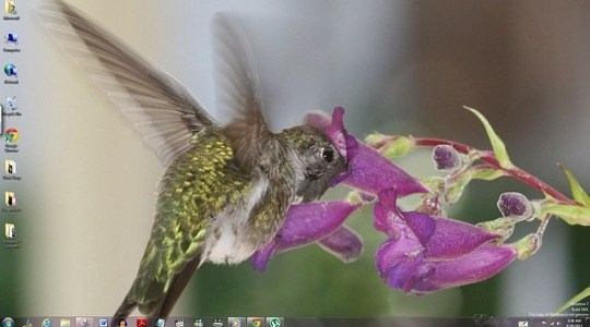 Hummingbirds Windows Theme