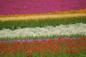 Hokkaido flowers