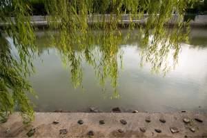 Hiroshima: Ota river