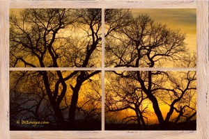 Dancing Trees Sunset Picture Window Frame Photo Art View