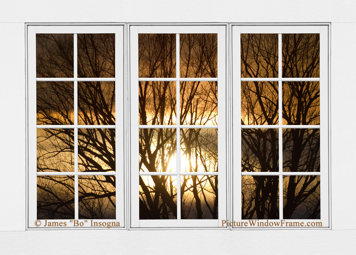 Golden Sun Silhouetted Tree Branches White Window View