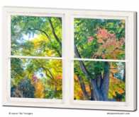 window views of autumn trees art