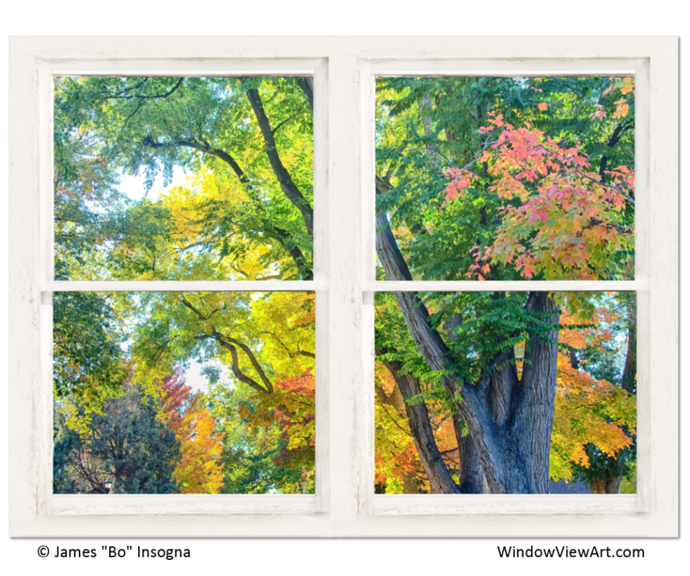 colorful trees window view