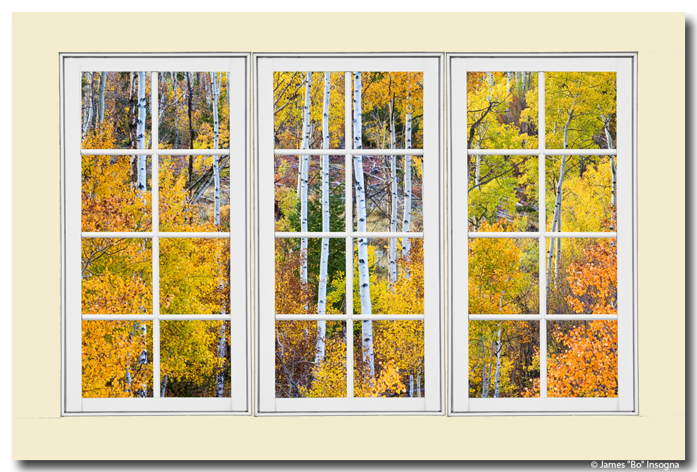 Aspen Tree Forest Cream 24 Pane Window View 32\