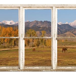 colorado horses window view