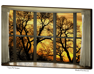 bay windows trees view