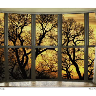 Forest Bay Window View