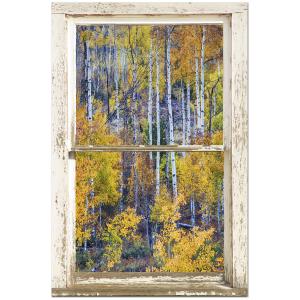 "Aspen Tree Magic Cottonwood Pass White Rustic Window Art 24""x36""x1.25"" Premium Canvas Gallery Wrap"