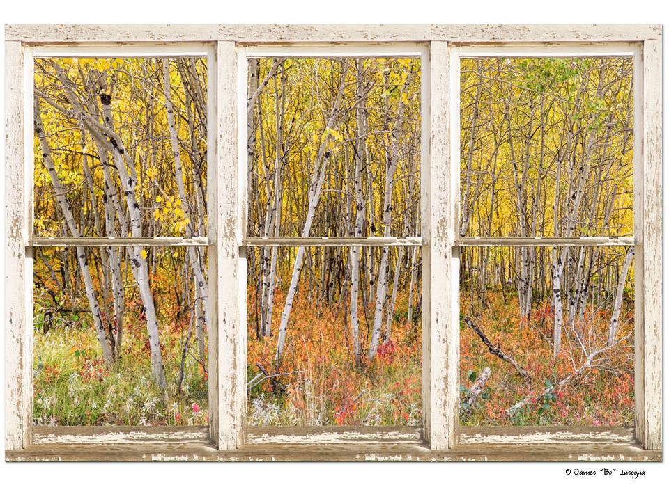 "Colorful Aspen Tree Forest White Rustic Panorama Window 32""x48""x1.25"" Premium Canvas Wrap Art"