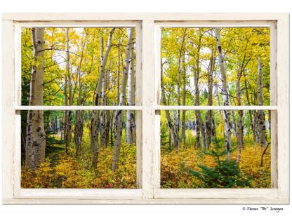 Golden Forest Rustic White Farmhouse Window View 32″x48″x1.25″ Premium Canvas Gallery Wrap