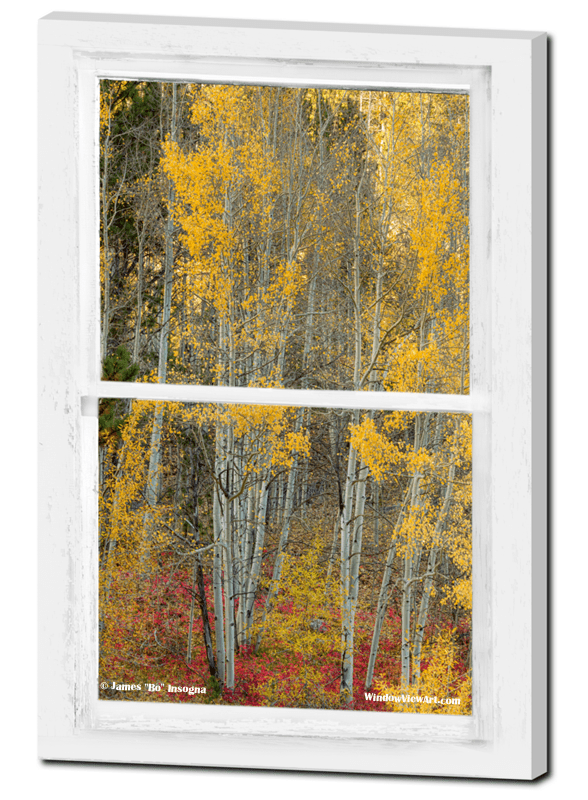 Aspen Forest Red Wilderness Floor Rustic Window View 24″x36″x1.25″ Premium Canvas Gallery Wrap $175.00 = Free Shipping