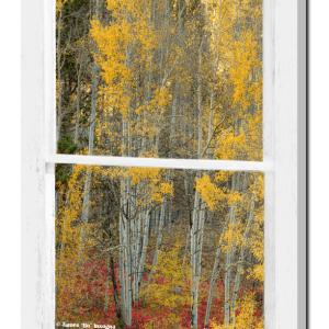 Aspen Forest Red Wilderness Floor Rustic Window View