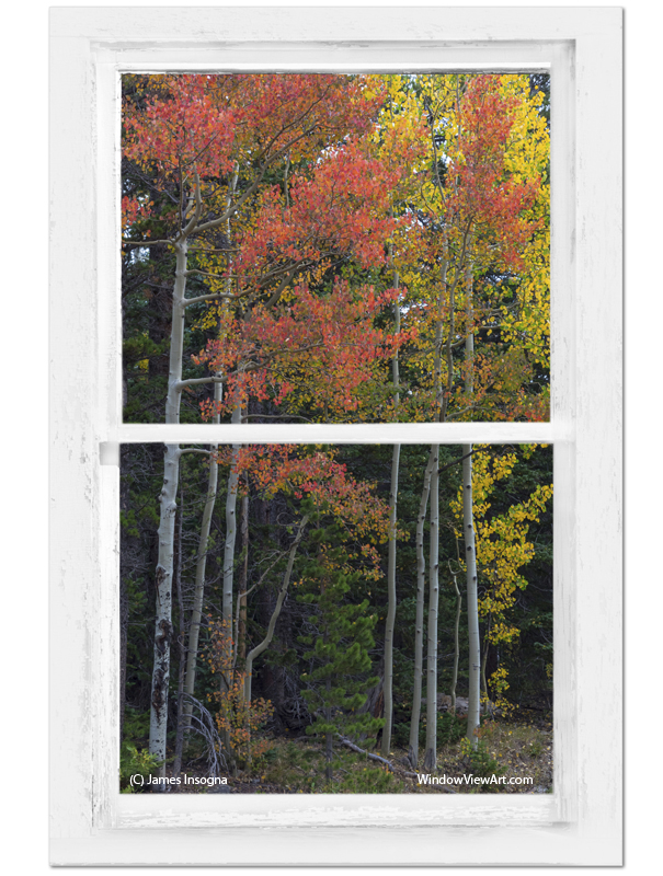 Forest Red Rustic Whitewashed Window View Art 24x36 Premium Canvas Gallery Wrap