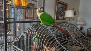 New Foster Nacho on Dani's cage