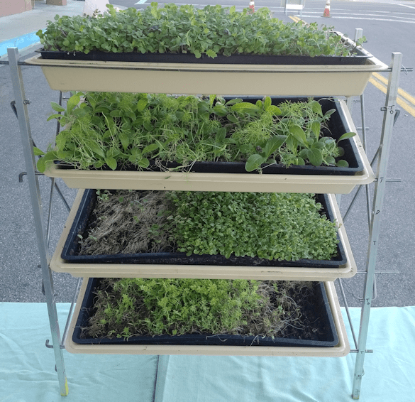 Homemade adjustable microgreens rack