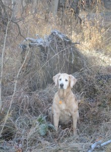 Maggie at Big Springs, Nov 2015