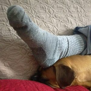 Delta the Boxer with Noah's wool socked foot resting on her head.