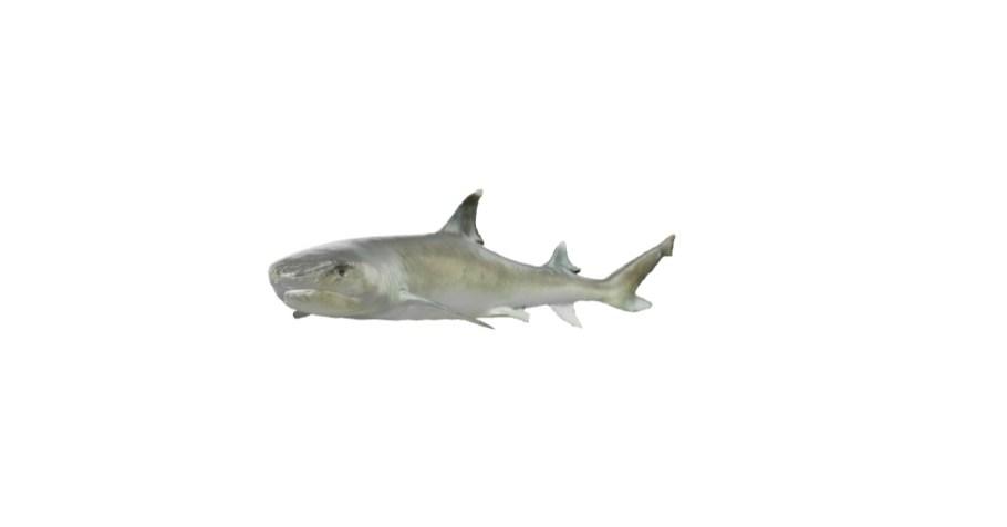 tiburones google app ar