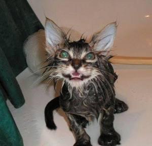 wet-cat-08