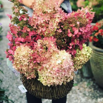 Hydrangea Arrangements – October 2, 2018