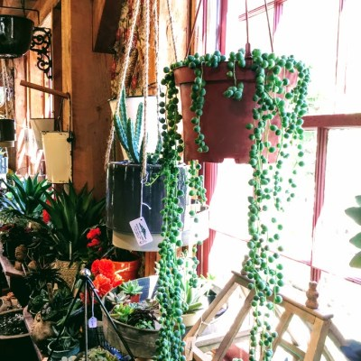 Selection of Tropicals and Houseplants – May 17, 2019