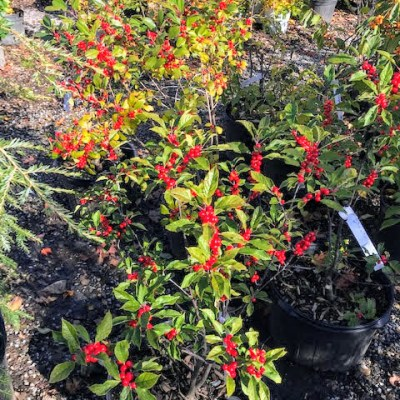 Fall is the Ideal Time for Planting – October 30, 2019